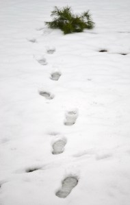 Footprints in snow 009