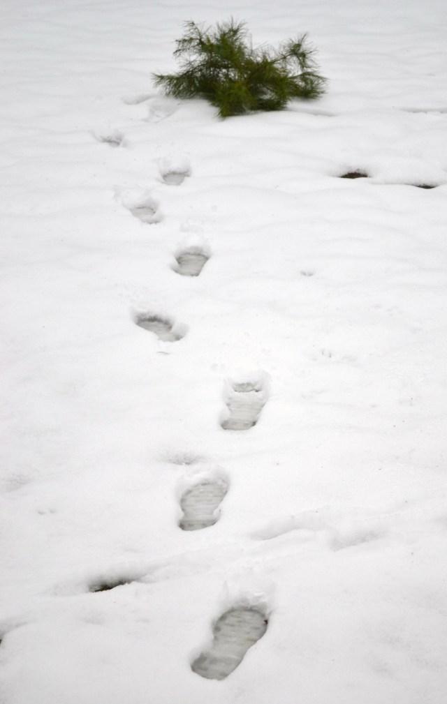 Footprints in snow 009