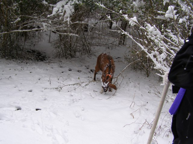 A Walk in the Snow © Freeda Baker Nichols