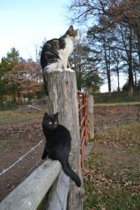 Calvin and Cougar