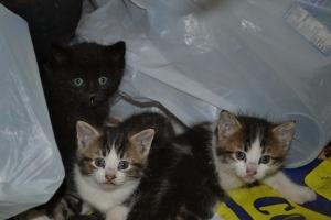 kittens in Sept 2012 005