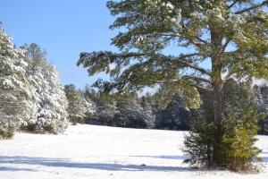 snow #4 005