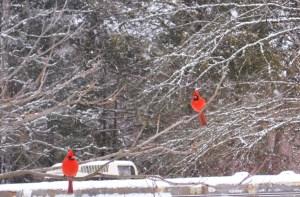 Redbirds Waiting