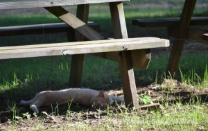 Twister naps in shade of picnic table-- ninety two in sun