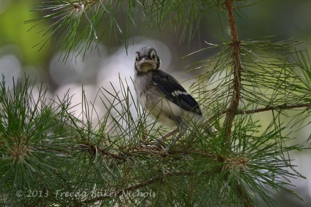 """""""I got out of my nest, but I can't fly yet."""""""