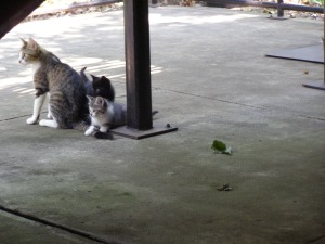 Cat and kittens at Hemingway's Barn Studio in Piggott, Arkansas