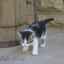 kittens # Second litter 033-1