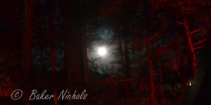 moon glows through the pines in cool of the autumn night-- harvest is over