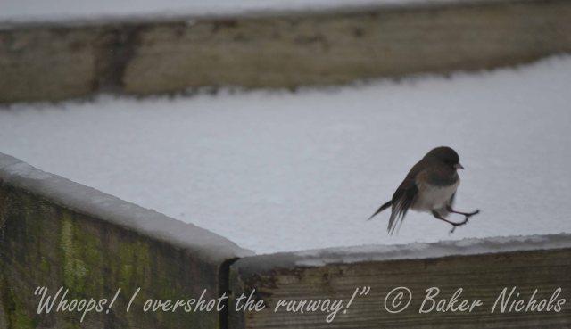 bird - 1