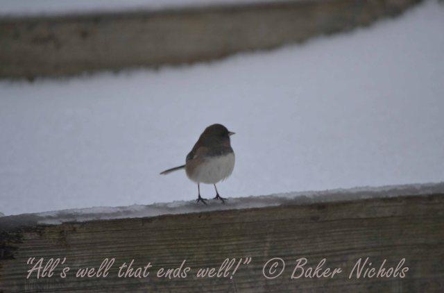 bird - 3