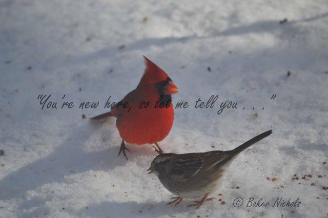redbird & sparrow