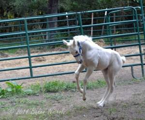 Foal Day 21 030-2