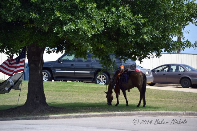 A cowboy dismounted and strode into a bank in Mt. Pleasant, Texas, leaving his horse to graze beneath the tree, a modern day hitching post. July 7, 2014.