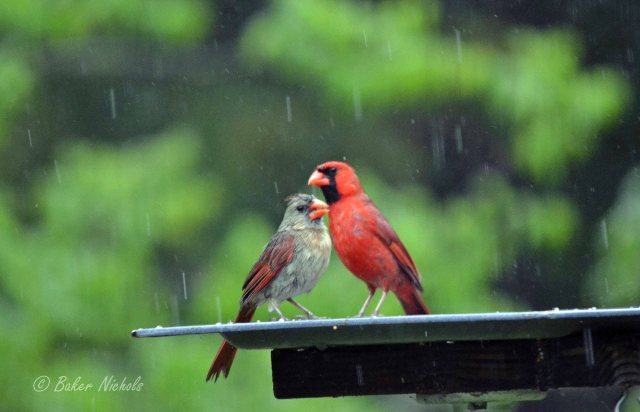 """""""Thy fate is the common fate of all, into each life some rain must fall . . .""""   Quoting from """"The Rainy Day"""" by Henry Wadsworth Longfellow (1807 - 1882)"""