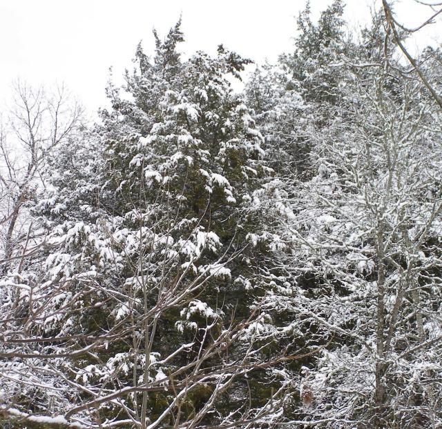 2011-snow-jan-20-2-019.jpg
