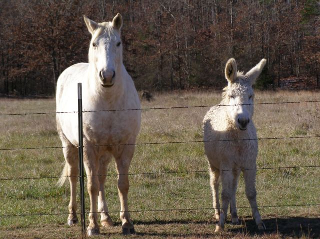 White Horse and Donkey