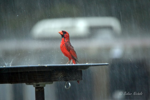 Just not singing in the rain.