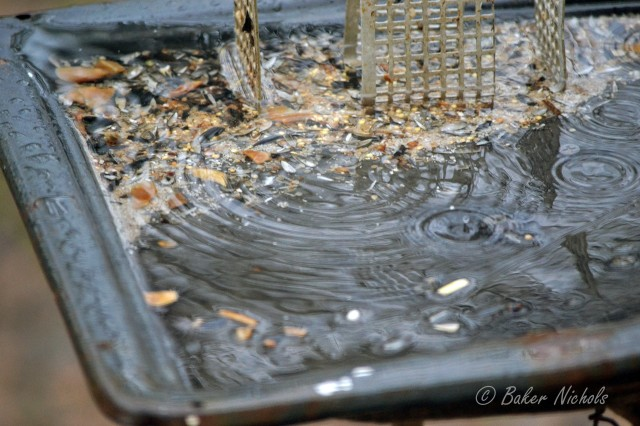 Find the smiley face in the puddle of water in the feeder.