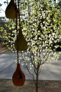 Pear Tree and Hanging Pots from Mexico