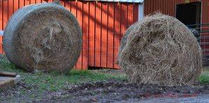 hay (2)