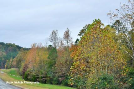 Autumn -
