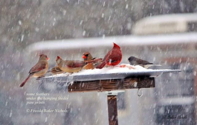 Birds in the snow-1