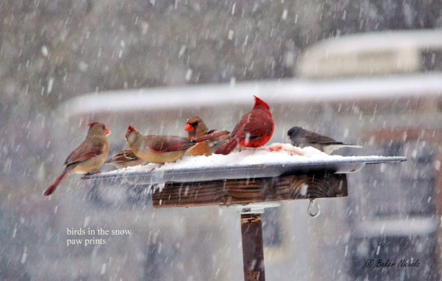 Birds in the snow - 2