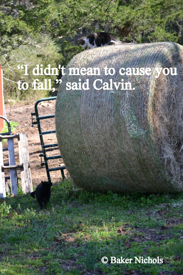 """I didn't mean for you to fall,"" Calvin apologizes."