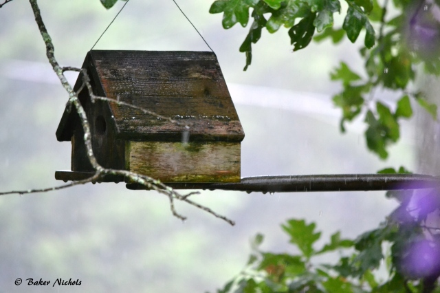 rain on birdhouse