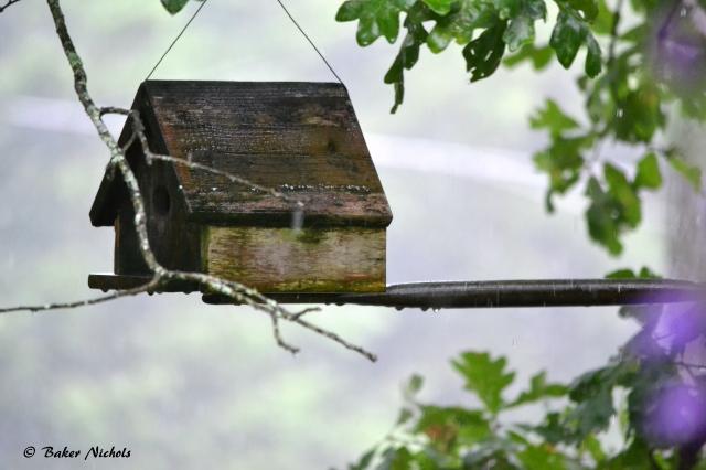 rain on birdhouse
